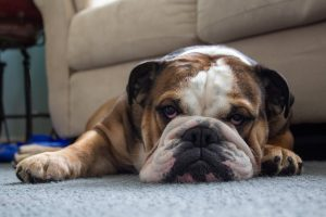 How to Remove Pet Stains from Your Carpet